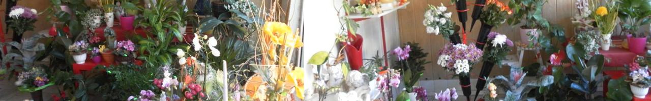 Biana's Blumenboutique